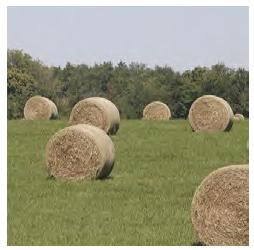 wholly manikin dating amateur in farm